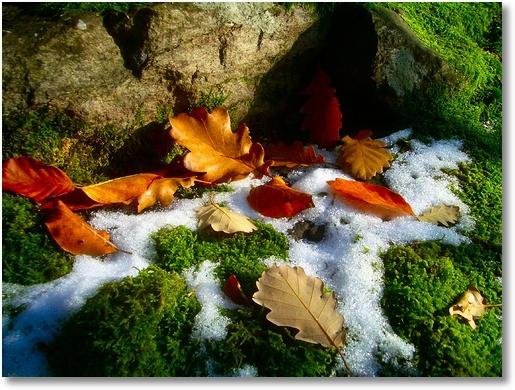 Herbst Schnee
