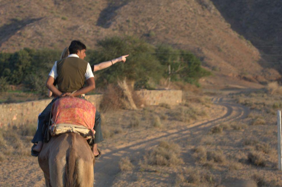 Pushkar Kamelreiten