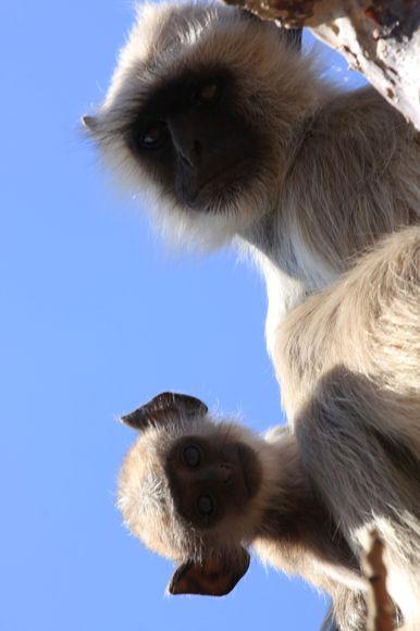 Affe mit Baby