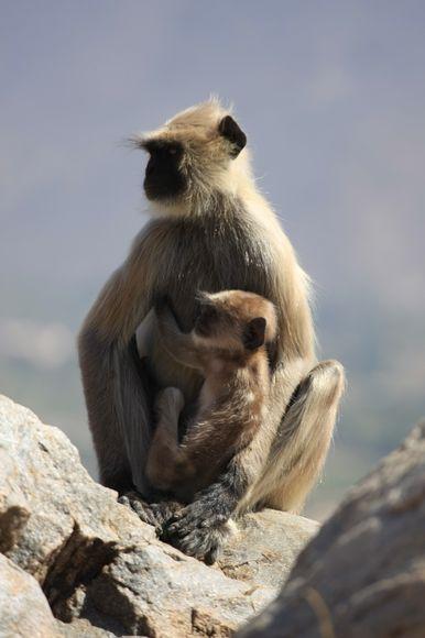 Affenmutter mit Kind