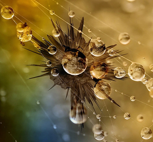 Makro Spinnennetz Wassertropfen
