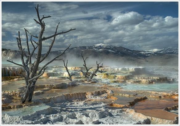 Baum Salzwüste