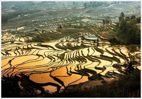 Reisfelder Sonnenuntergang