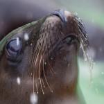 Robbenfütterung im Tierpark Hellabrunn