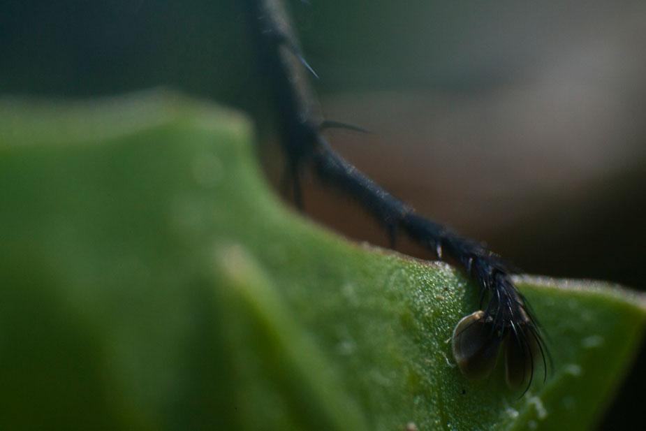 Fuß einer Fliege
