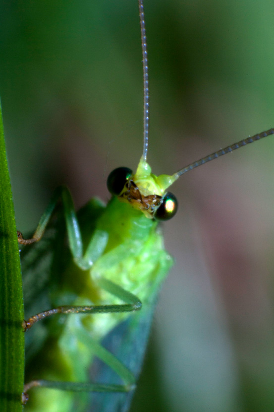 Makrobild eines Insektes