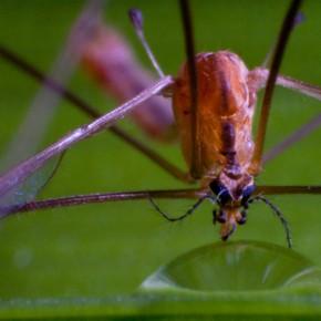 Das Insekt und der Wassertropfen